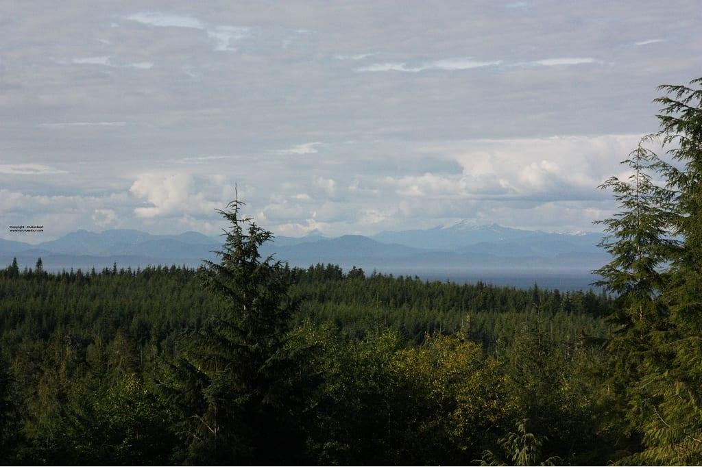 Wald und Berge am Horizont