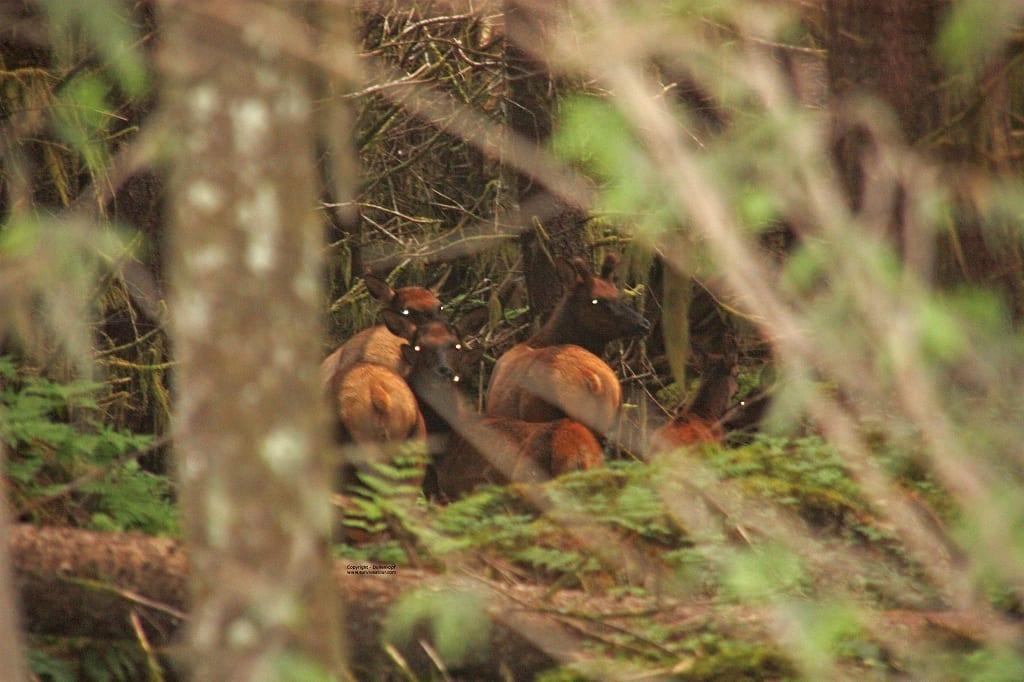 Elk Kanada Survival Urlaub